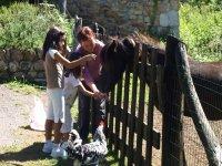 Alimentando a los caballos