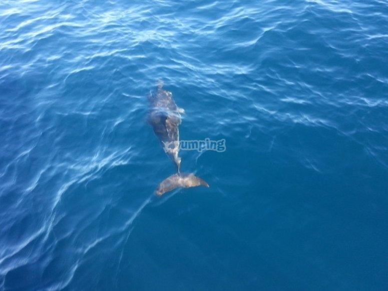 Costa Blanca的海豚