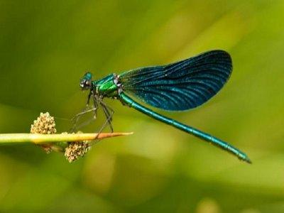 通过Padul湿地的昆虫学路线,4小时