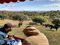 Visita a ganadería brava en Gerena 2 h y 30 min