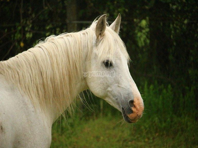 Cavallo del nostro cavallo