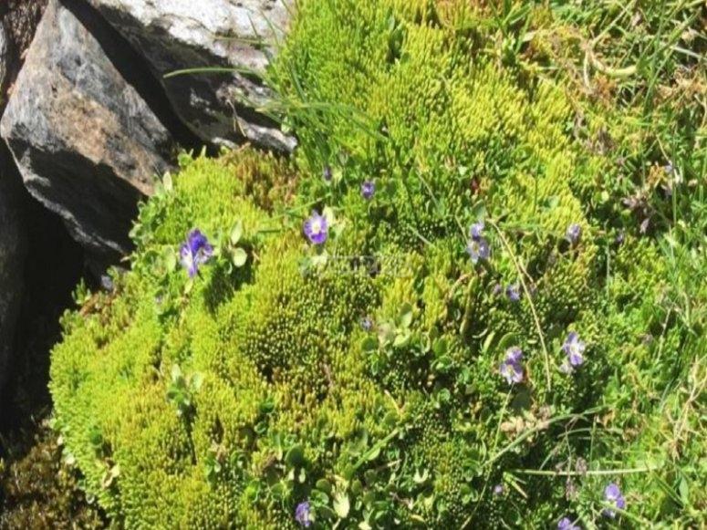 Incontra la flora della Sierra Nevada