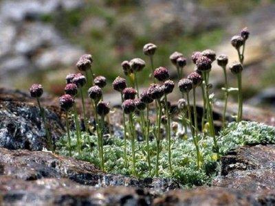 Senderismo en Sierra Nevada endemismos botánicos
