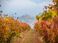Un recorrido por nuestras tierras repletas de viñedos