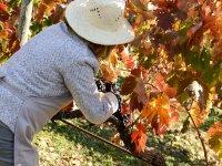 Trabajadores en los viñedos