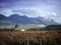 Ermita entre los viñedos