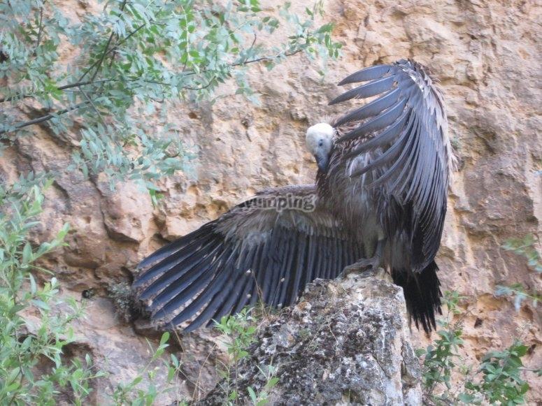 Aves en Segovia