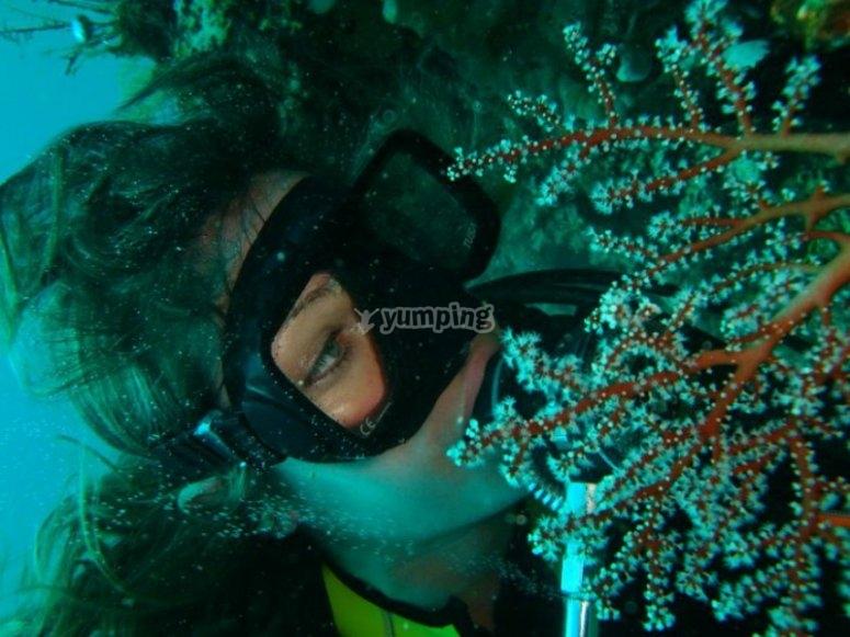 Get close to the marine specimens