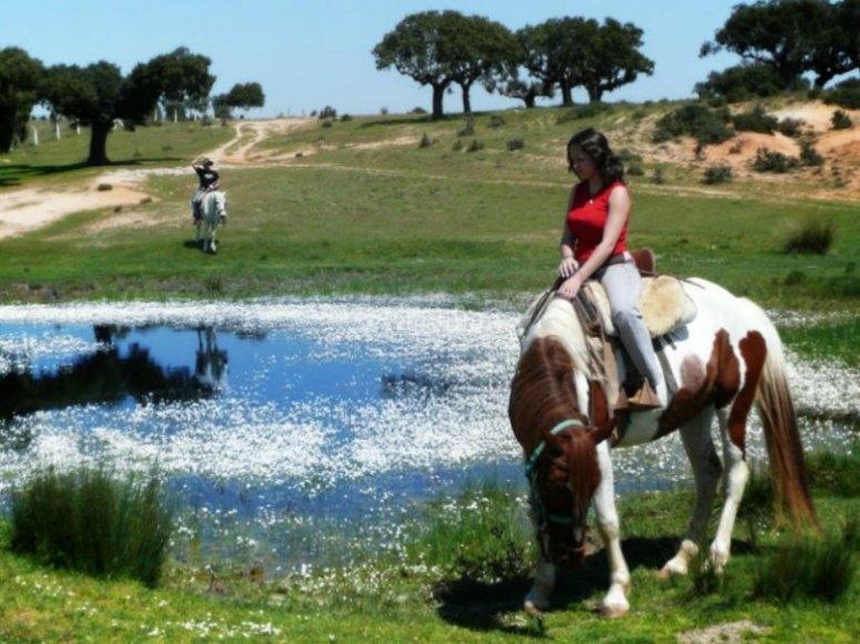 池塘两边的马。
