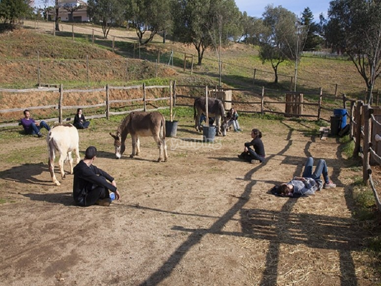 在Arenys de Munt进行驴治疗