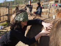 coaching groups with donkeys Arenys 3h