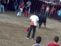 La mucca aspetta il cameriere