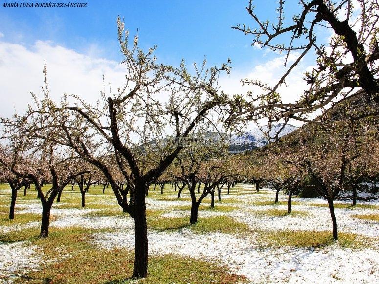 Almendros en invierno
