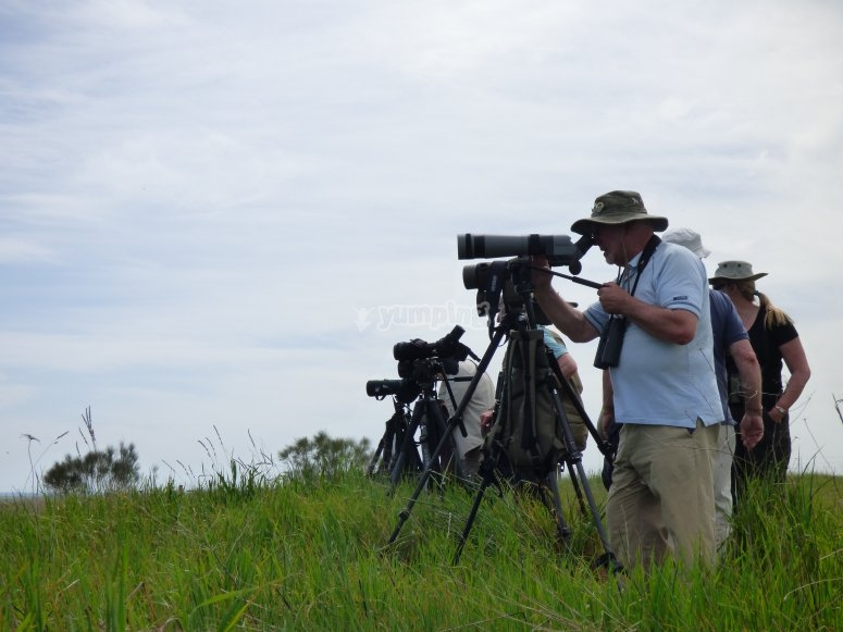 观察草原鸟类