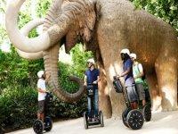Segway代步车游览Ciutadella 1小时。