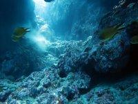 Among fishes
