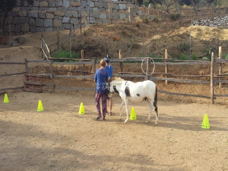 actividades con los burros
