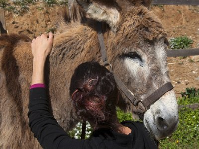 Donkey therapy at Arenys de Munt, 1h