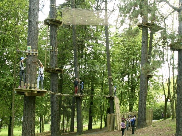 Avventure sugli alberi