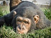 Primate en el cesped