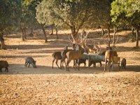 wildlife observation