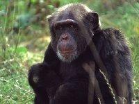 Uno de las especies de monos de la fundación