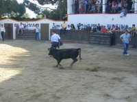 Running in front of the bull