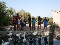 Viendo a los patos del estanque