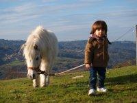 Ponis para niños