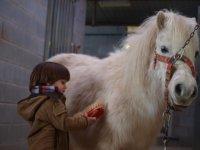 Primero contacto con los ponis