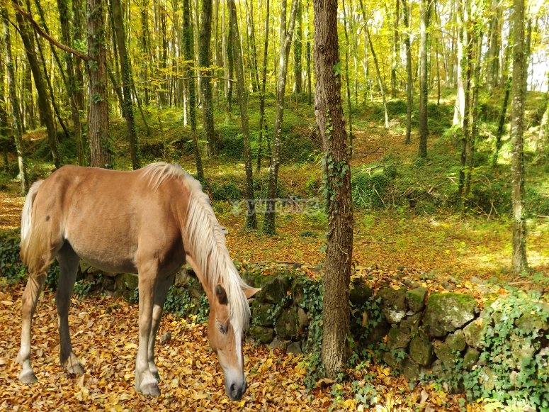 Cavallo nella foresta
