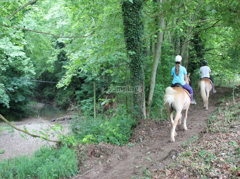 Passeggiate a cavallo attraverso la foresta