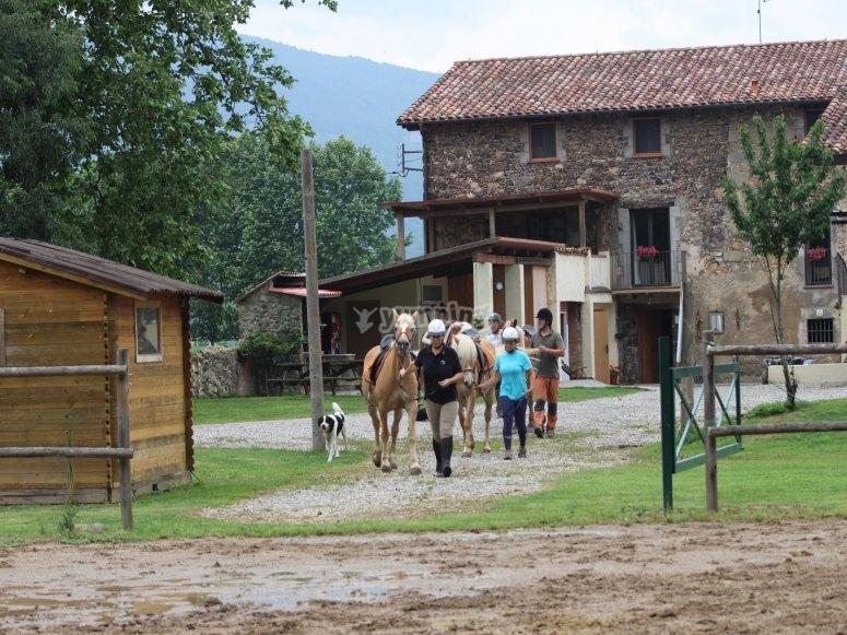 Cavalli nella fattoria