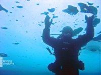 Sumérgete bajo el mar