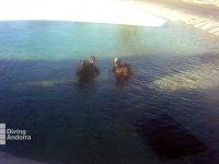 Submarinismo en Andorra