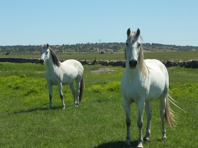 Horseback trip for kids, San Pedro del Valle