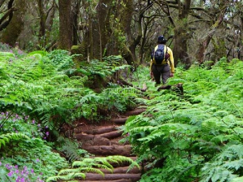 Ruta por el Bosque Encantado
