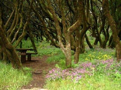 Senderismo en El Bosque Encantado en La Gomera 4h