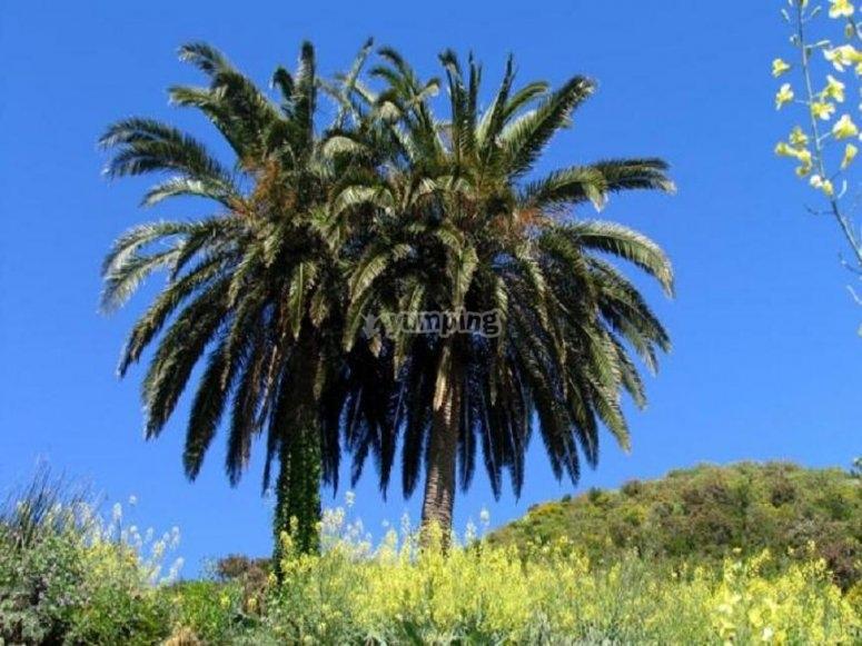 Vegetacion en La Gomera