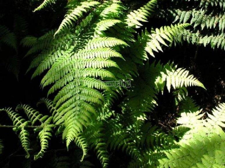 Vegetacion de La Gomera