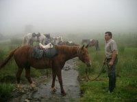 Horse professionals