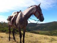 享受无与伦比的pasiaje马匹