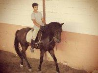 Clase de equitación en La Puebla del Río 1 hora