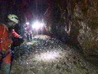 穿过洞穴画廊前进