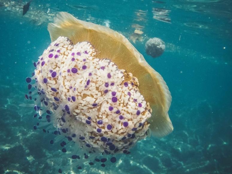 Secretos del fondo del mar