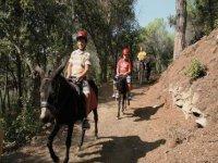 一条带着我们的驴子的路线