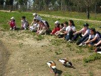 Alimentando a los patos