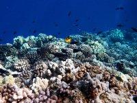 Snorkel en el Mediterráneo