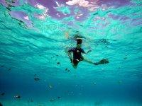 地中海浮潜呼吸管在潜水中穆尔西亚