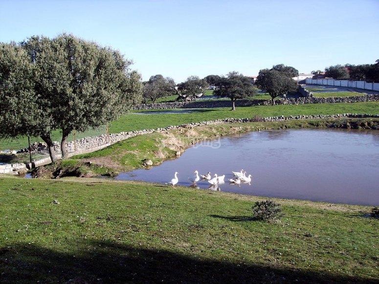 Charca de los patos